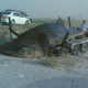 The one that did not get away - a 1500 Kilogram (3300 pounds) fish from the Black Sea - Russia caught during one of Ralph's visits
